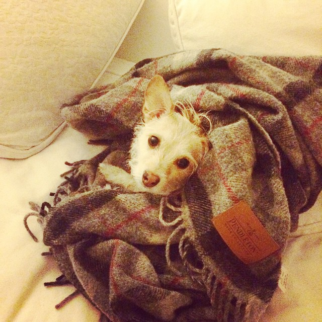 Someone's not a fan of cold nights but is a fan of Pendleton blankets.