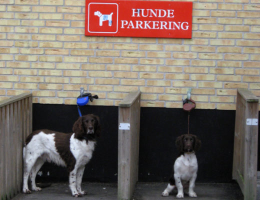 Dog Parking in Denmark